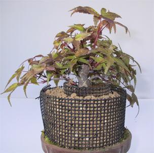 Bonsai Marcotteren