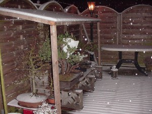 Bonsai in de winter afdak