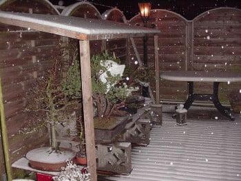 Bonsai in de winter
