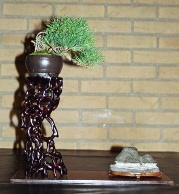 Shohin-Bonsai2