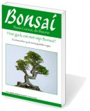 omslagBasisBonsai